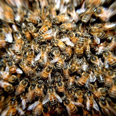Oregano Infused Honey? — Chromatography Investigates Health Benefits for Bees