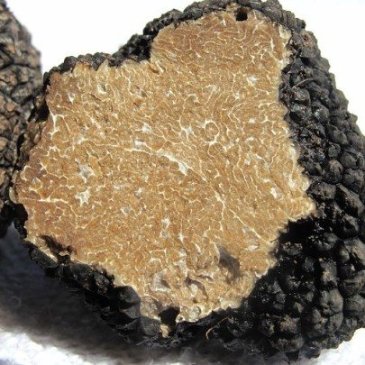 Searching for Truffles — Chromatography Sniffs out the Real Deal